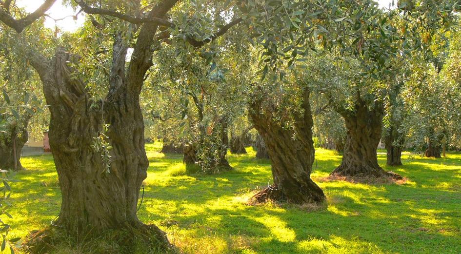 Prodotti e Servizi per Agricoltura e Allevamento