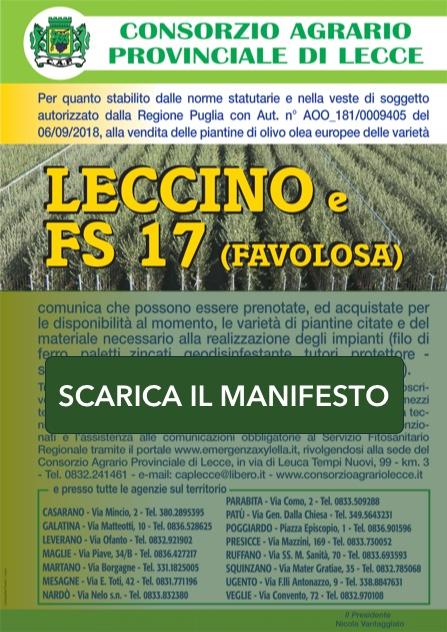 Manifesto Vendita Piantine Olivo Lecce